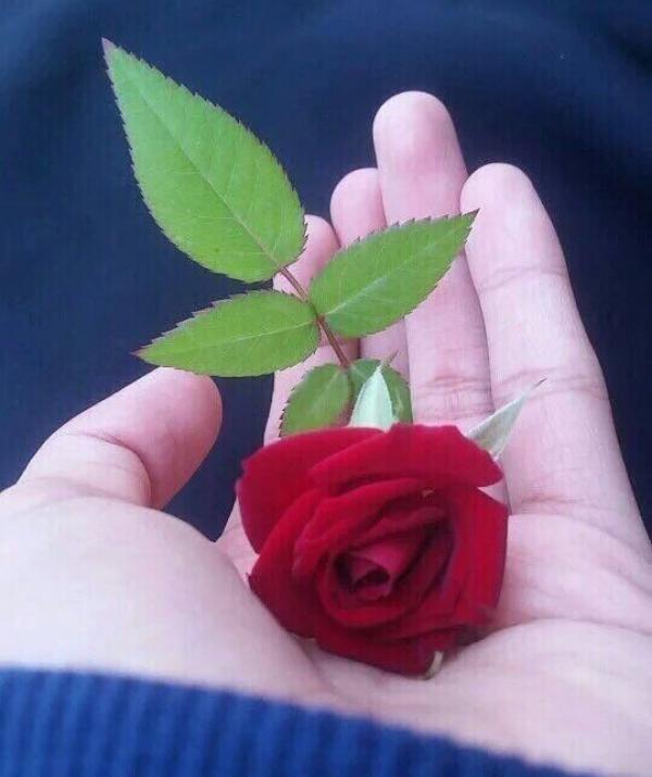 Mục đích của đạo Phật - Bông hồng cài áo (Nhất Hạnh)