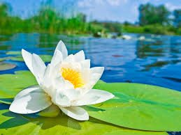 Mục đích của đạo Phật - Gì đẹp bằng sen...