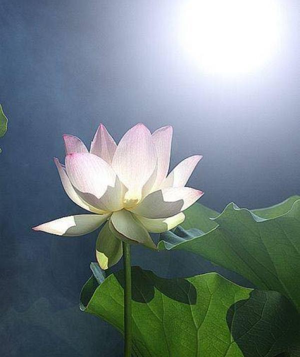 Mục đích của đạo Phật - Ánh trăng nhìn ta đó