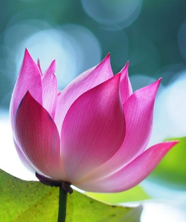 Mục đích của đạo Phật - Tài thuyết pháp của ngài Ca-chiên-diên