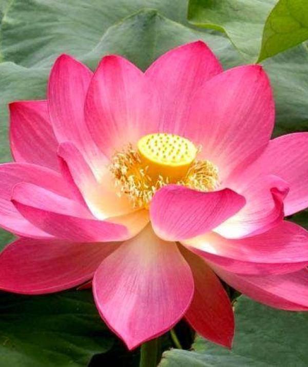 Văn học Phật giáo - Hiểu rõ Phật trí