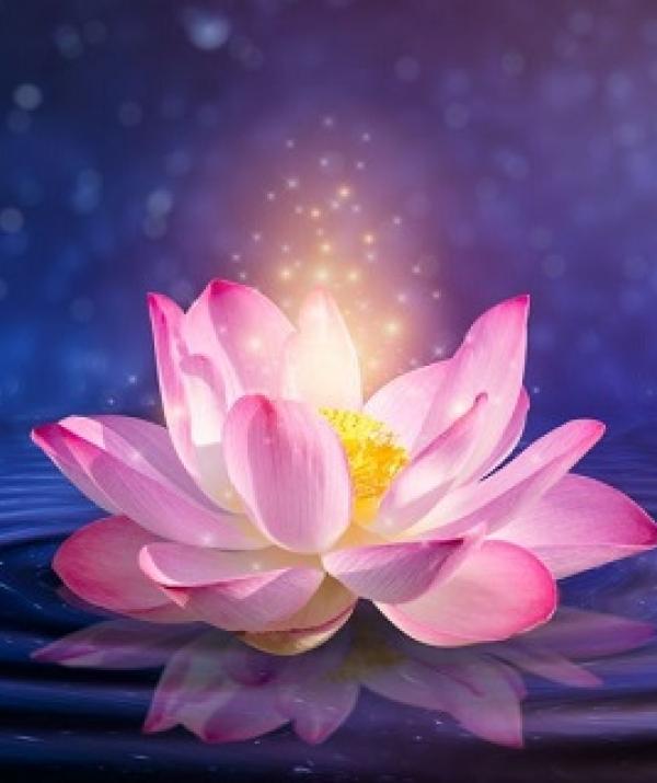 Văn học Phật giáo - Căn của Ý thức