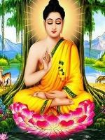 Phật Pháp Căn Bản