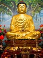 Phật dạy không làm các việc xấu ác