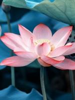 Hương Phật