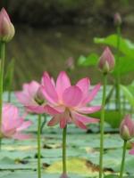 Người trí thức và đạo Phật