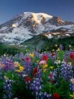 Ký sự: Nở hoa vùng Tây Bắc