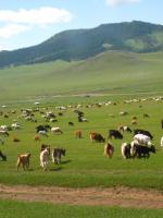 Đuổi kịp Mông Cổ