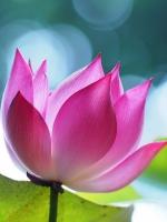 Mục đích tu hành trong Phật pháp là gì?