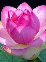Phật khuyên chúng sinh phải đoạn trừ nghi hoặc