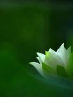Nhà thơ Phật tử W. S. Merwin (1927-2019)