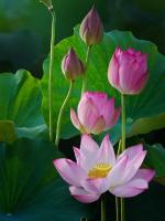 Nhân đạo là pháp dọn đường cho Phật đạo